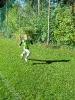 Pustertaler Herbstlauf Leisach
